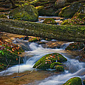 Tree Bridge In The Smokies by Paul W Faust -  Impressions of Light