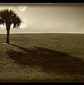 Tree by Bruce Bain
