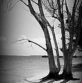 Tree By The Sea by Laurie Perry