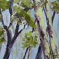 Tree Canopy by Barbara Andolsek