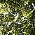 Tree Canopy by David Pyatt