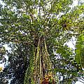 Tree Canopy by Paul Fell