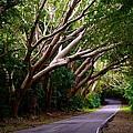 Tree Canopy by Ricardo J Ruiz de Porras