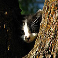 Tree Cat by Greg Patzer