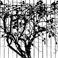 Tree by Charles Garrett
