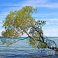Tree by Charline Xia
