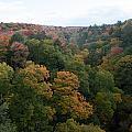 Tree Color by Linda Kerkau