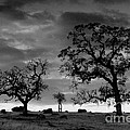 Tree Family In Black And White by Robert Woodward
