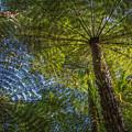 Tree Ferns From Below by Steven Schwartzman