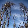 Tree Fingers by Douglas Barnard
