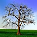 Tree by FL collection