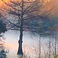 Tree Fog Sunrise by Kimo Fernandez