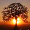 Tree Fog Sunrise
