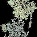 Tree Fungus by David Yocum