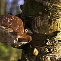 Tree Fungus  by Rob Hawkins