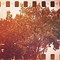 Tree Grunge Vintage Analog Film by Andy Gimino