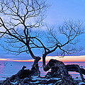 Tree Hanging Over Lake - Photographers Collection by Andre Distel