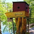 Tree House Boat by Sherman Perry