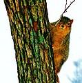 Tree Hugger by Daniel Thompson