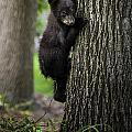 Tree Hugger by Sara Hudock