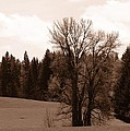 Tree by Image Takers Photography LLC