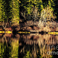 Tree Impressions by Belinda Greb