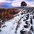 Tree In A Field  by John Farnan