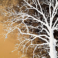 Tree In Abstract by Linda Unger