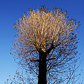 Tree In Afternoon Sunlight by Steve Ball