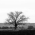 Tree In Black And White by La Dolce Vita