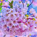 Tree In Bloom by Joe Geraci