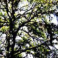 Tree In Blue Ridge Mountains by Glenn Aker