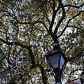 Tree In French Quarter by Bev Conover