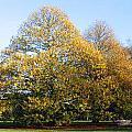 Tree In Kew Gardens by Helene U Taylor