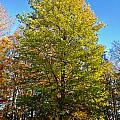 Tree In The Cemetery by Jonny D