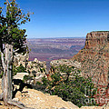 Tree In The Grand Canyon by Jennie Breeze