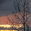 Tree In The Setting Sun by Heather Oldcrankone