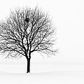 Tree In Winter Landscape, Black And by Nikitje