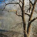 Tree In Winter by Lois Bryan
