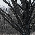 Tree In Winter by Tracy Winter