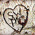 Tree Initials by Alice Gipson