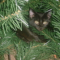 Tree Kitten by Bonfire Photography