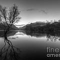 Tree Lake by Darren Wilkes