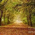 Tree Lane by Les Palenik