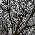 Tree Limb 4 by William Norton