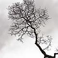 Tree Limb by Dennis Coates