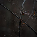 Tree Limb With Rain Drops 2 by J Riley Johnson
