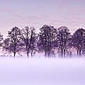 Tree Line by Jorge Maia