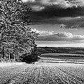 Tree Line by Rod McLean