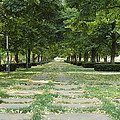 Tree Lined by Ken Kobe